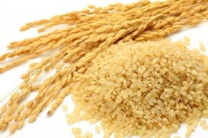 玄米 食べ過ぎ 太る カロリー