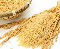 玄米 ダイエット 食物繊維 栄養 豊富